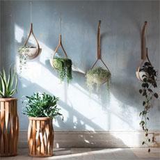Pflanzen stilvoll in Szene setzen